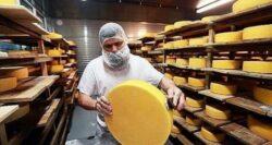 Рабочие на сырную фабрику